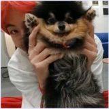 テテ,テヒョン,愛犬,名前,ヨンタン,タナ,動画