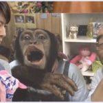 【動画】志村どうぶつ園特番まとめ/相葉くんパンくんと志村園長の絆に涙…〈2020.4.4〉